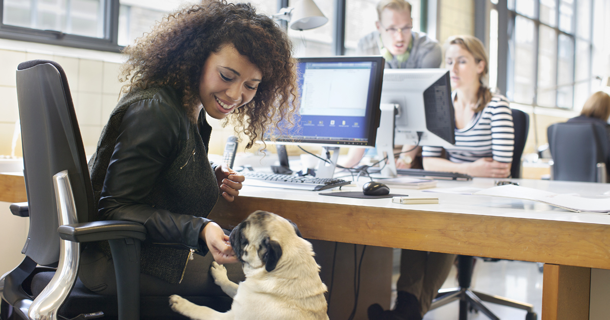 30 Apr 2014 --- Young woman petting dog at office desk --- Image by © Corbis