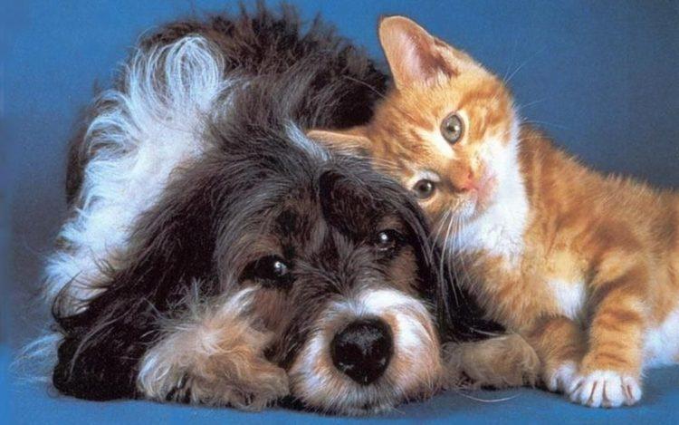 Gato-y-perro-18-750x469