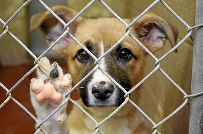 Perros-en-adopcion