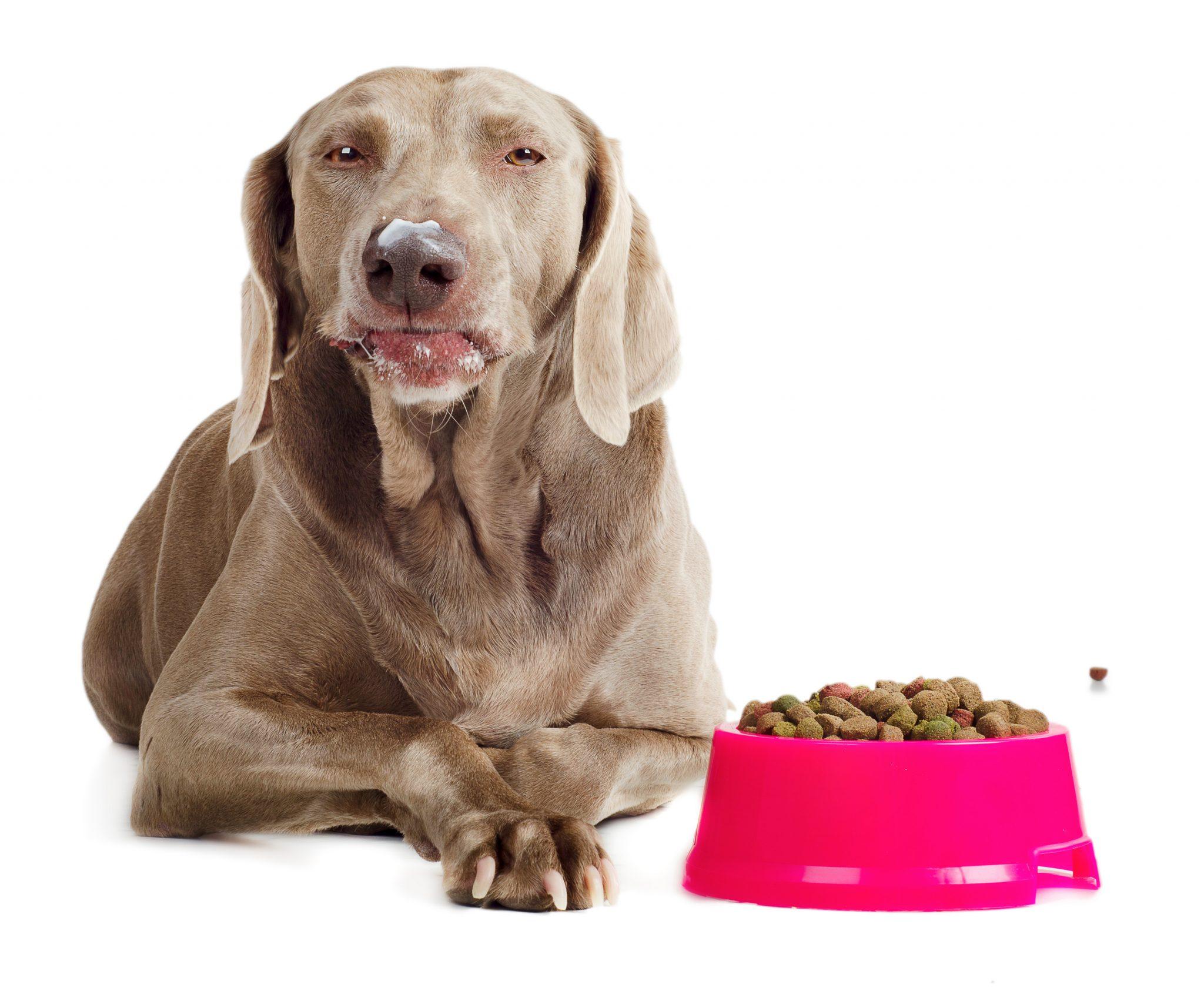 cachorro-que-come-muito