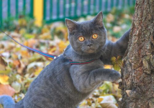 levar-um-gato-para-passear-na-correia