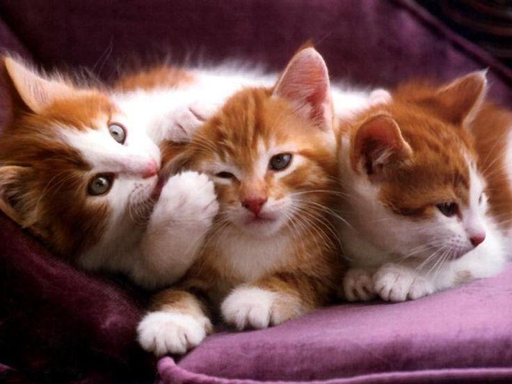 6450b024db752973dd45a19a1ce5edbe--cat-lady-dogs