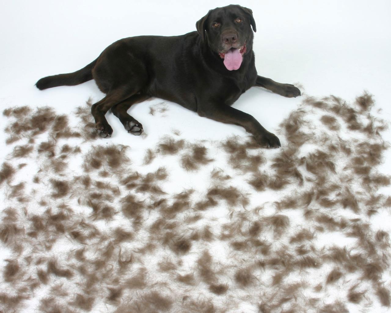 dog-hair_HWC