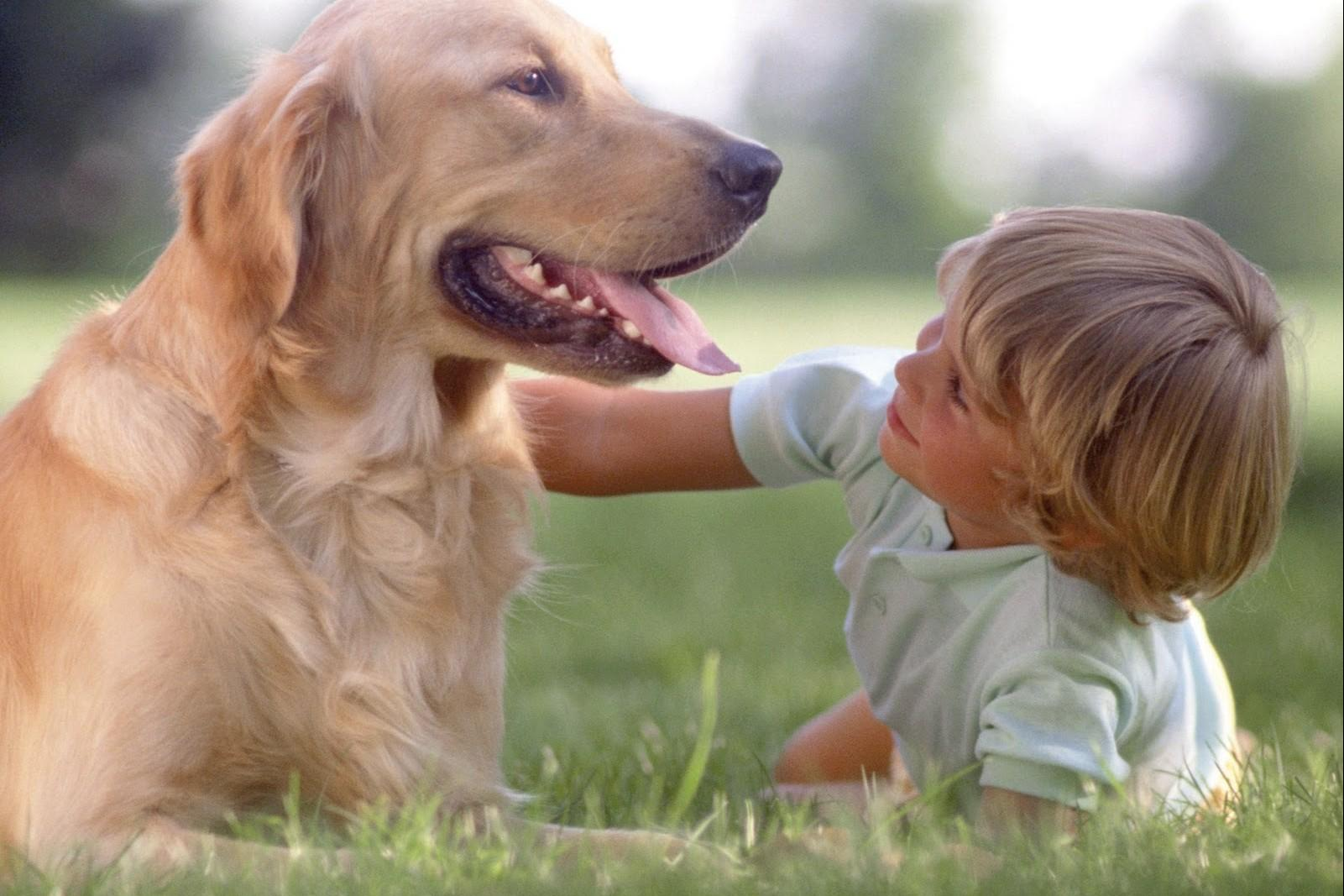 zooterapia-com-cachorros