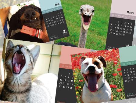 calendario-mascotas-blog-2015