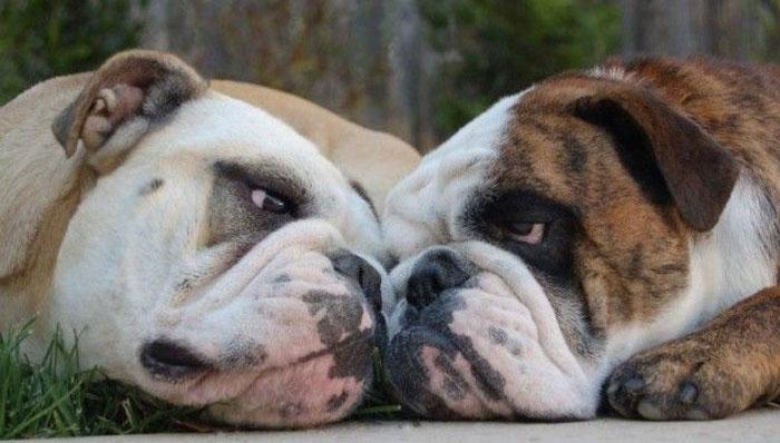 cachorro-namorando-1