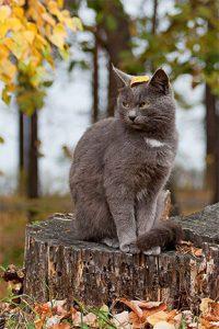 1632_5-informacoes-animal-outono