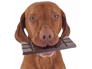 alx_cachorro-chocolate-01_original3