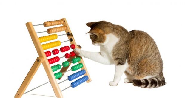 adestrar-gato