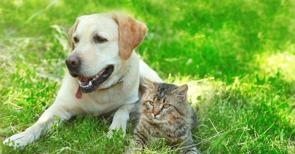 cuidados-mascotas-primavera-verdecora