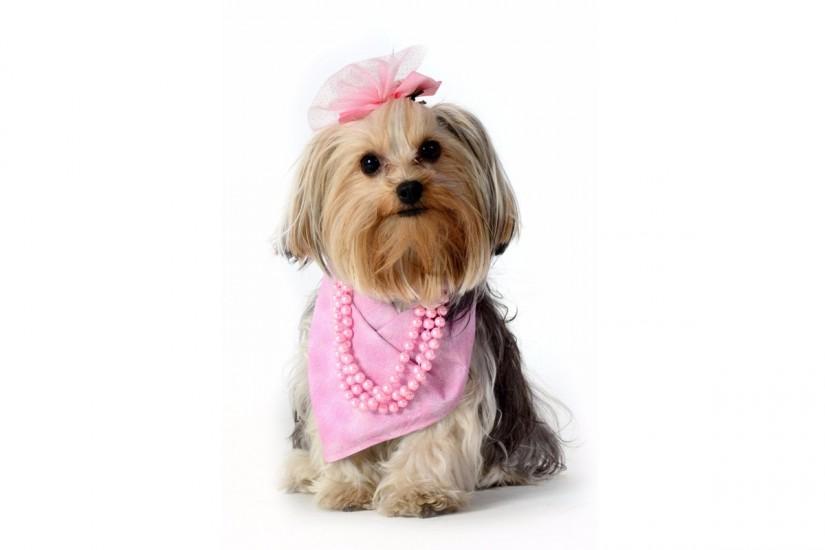 outubro-rosa-foto-Pet-Model-Brasil-Elayne-Massaini-web-825x550