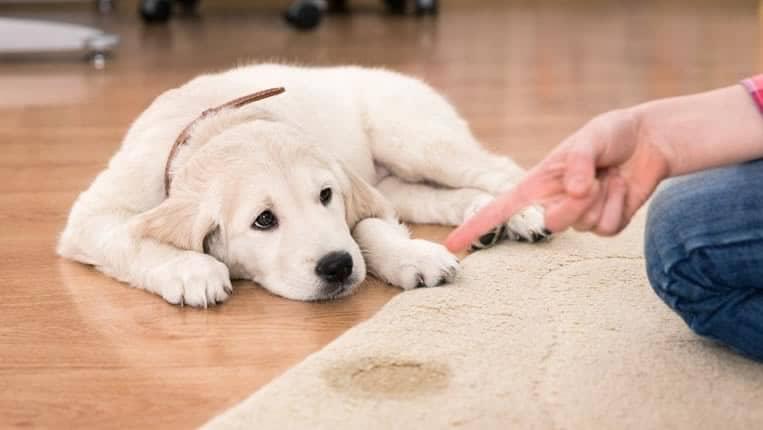 qual-o-melhor-eliminador-de-odores-para-cães