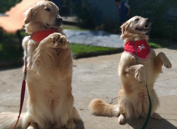 noticia_728521_img1_pet-terapia