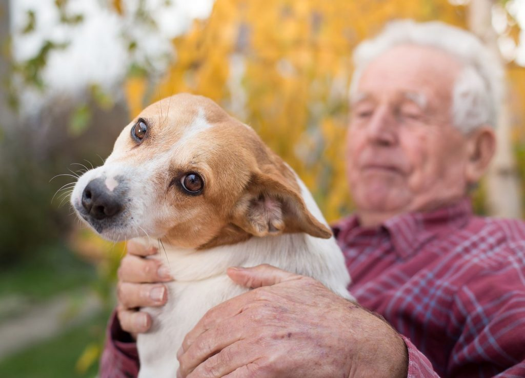 bigstock-old-man-with-dog-in-park-213754624