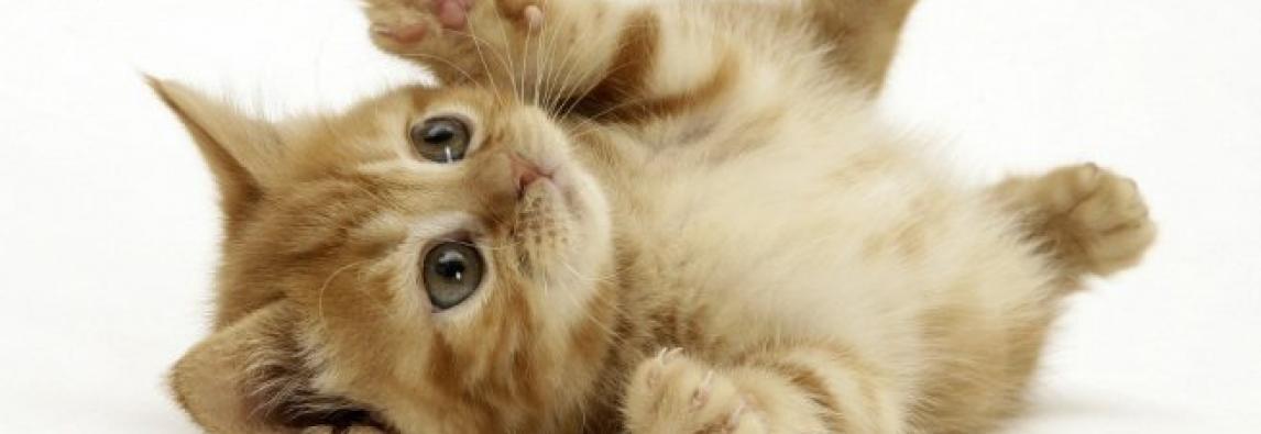 5 coisas que fazem um gato ser feliz