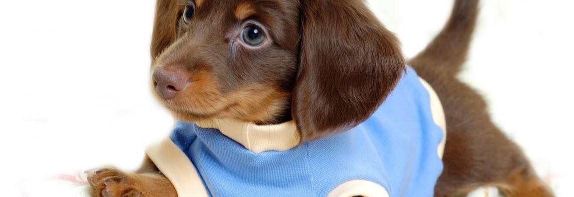 Cãozinho ganha cama muito pequena, mesmo assim demonstra gratidão