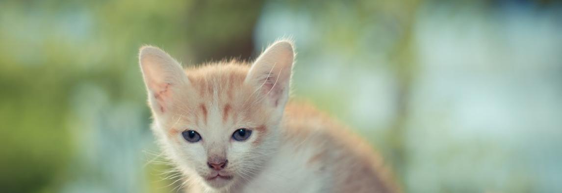 Sinais que seu gatinho usa para demonstrar que te ama