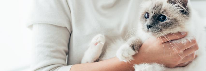 Cat sitter: o que saber na hora de contratar o serviço