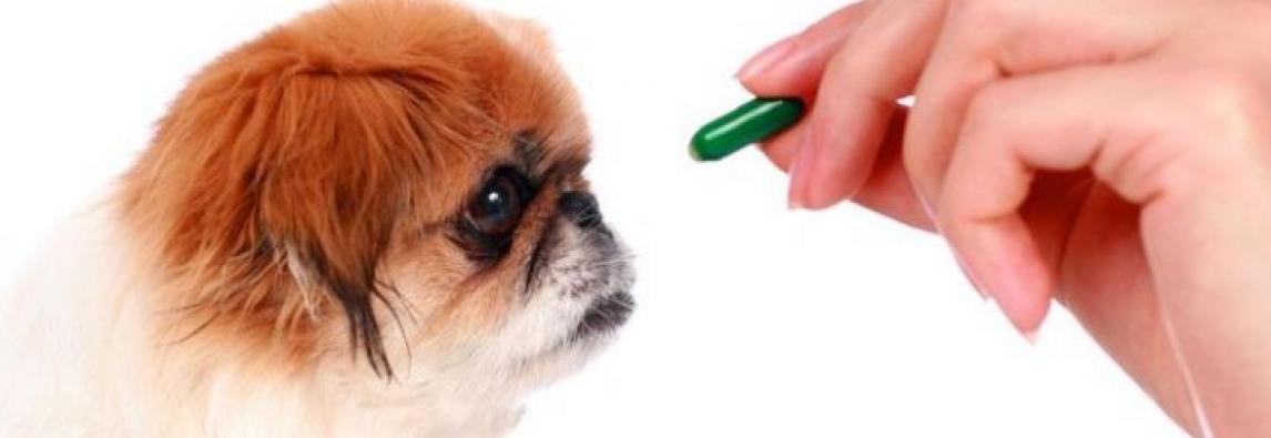 Como Medicar Animais de Estimação