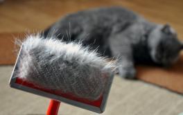 5 dicas infalíveis de como escovar gato
