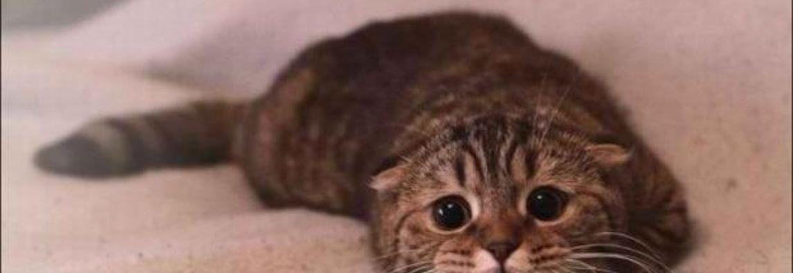 Meu gato está assustado, como posso ajudá-lo?