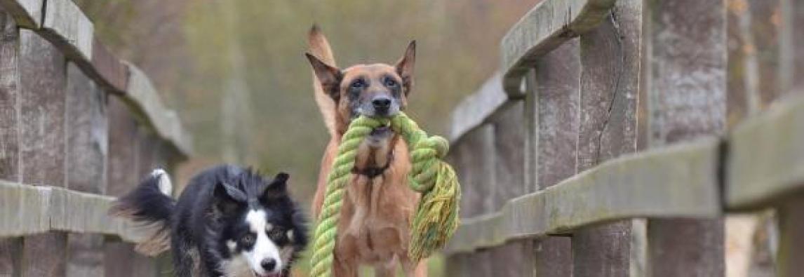 Ensinar o cachorro a soltar objetos
