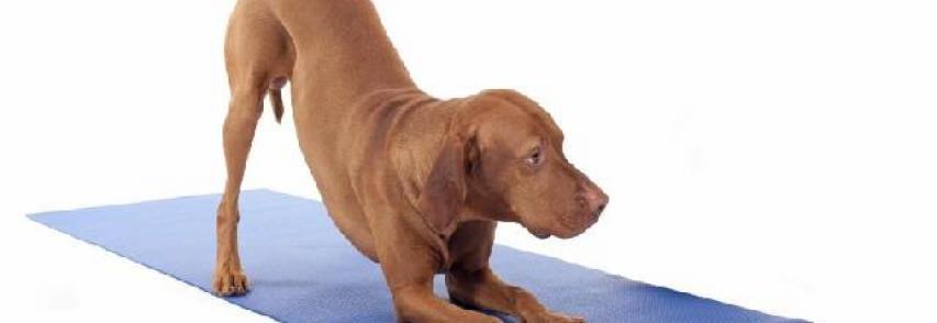 Conheça a Doga, a Yoga para cães