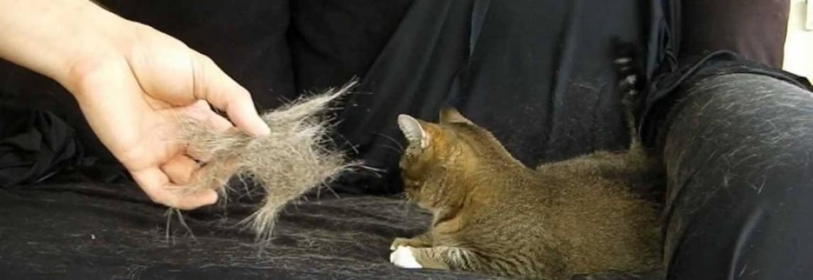 Chegou a estação da muda de pêlo para cães e gatos
