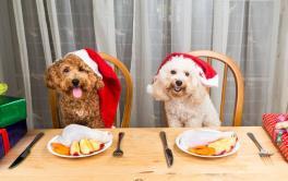 O que os animais de estimação podem comer no Natal?