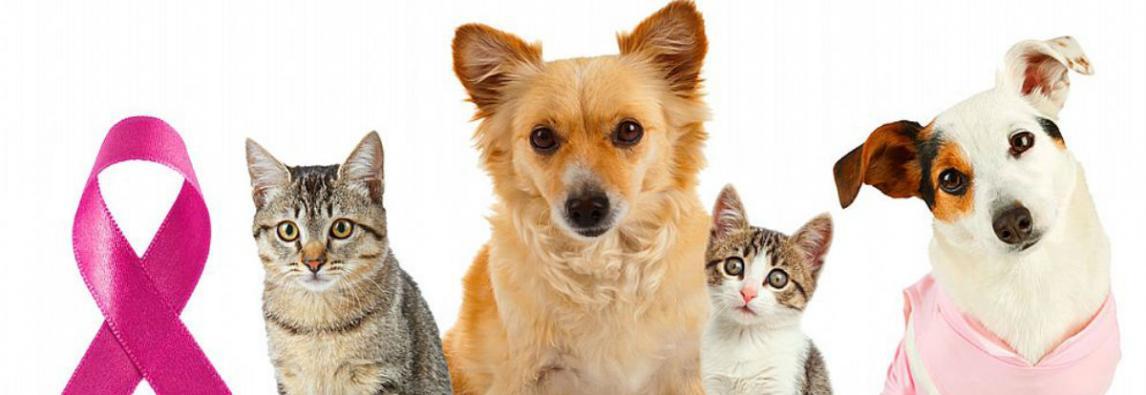Outubro rosa: cães e gatos também têm câncer de mama