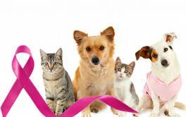 (Português) Outubro rosa: cães e gatos também têm câncer de mama