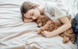 Estresse dos humanos pode ser passado para seus cães