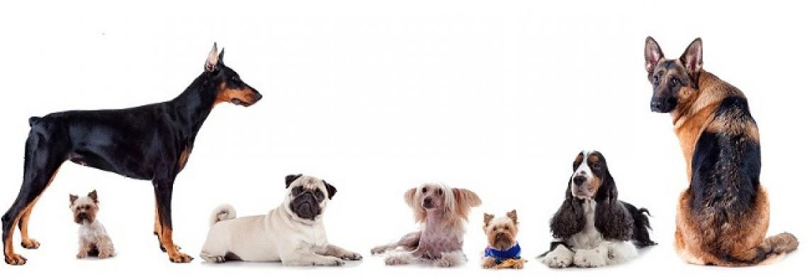 Como calcular a idade real dos cachorros