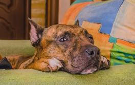 Você conhece as doenças de pele em cães que são mais comuns?