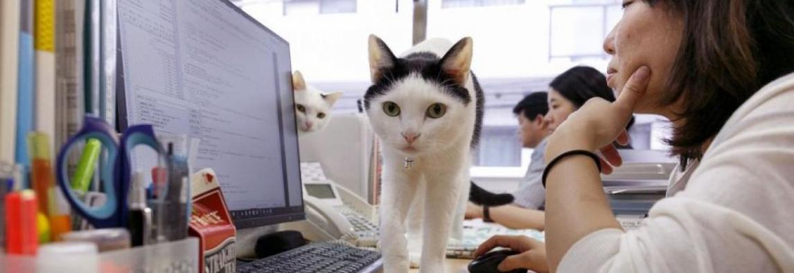 Animais no trabalho diminuem o estresse
