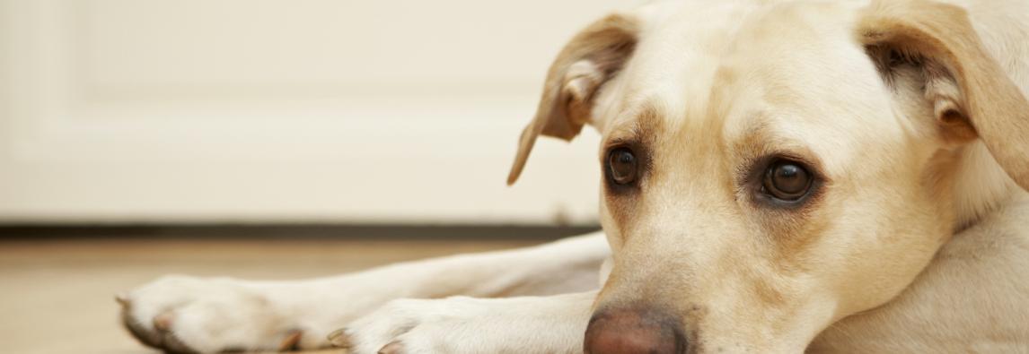 As principais causas da coceira em cães