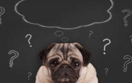 Disfunção cognitiva canina: você já ouviu falar dela?