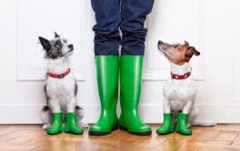 Como passear com o cachorro em dia de chuva?