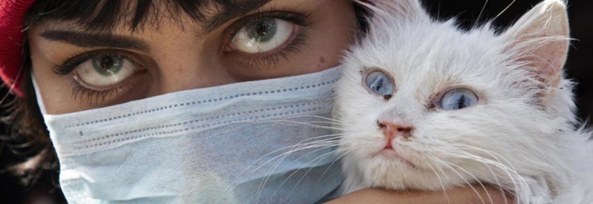 Saiba como cuidar de cães e gatos durante a pandemia de coronavírus