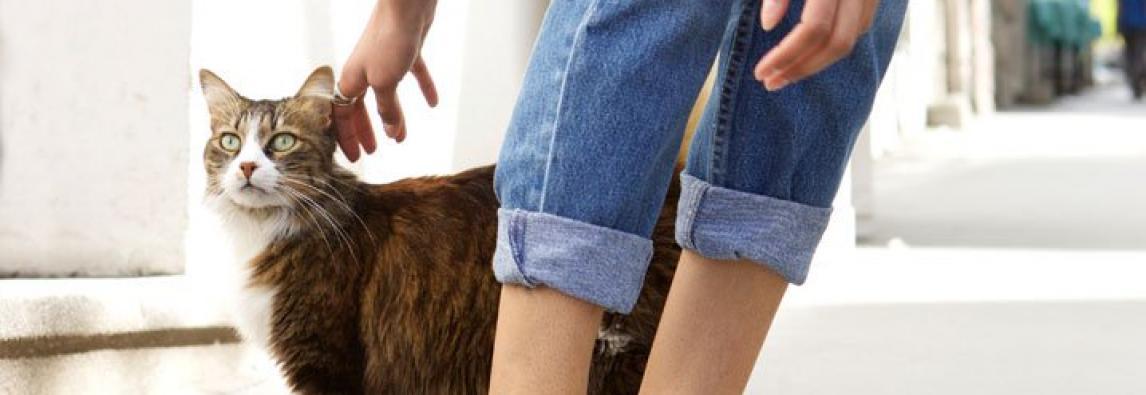 Passear com gato: as melhores dicas para sair com felinos