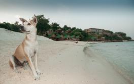 Nas férias, o que fazer com os animais de estimação?