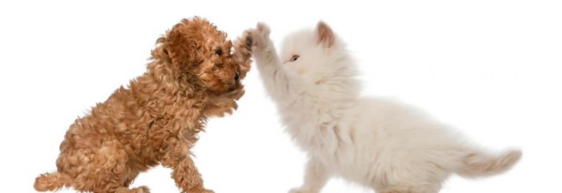 Cachorro com Gato – Proporcionando uma boa convivência