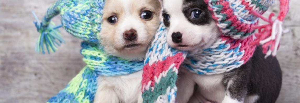Os cães tambén sentem frio