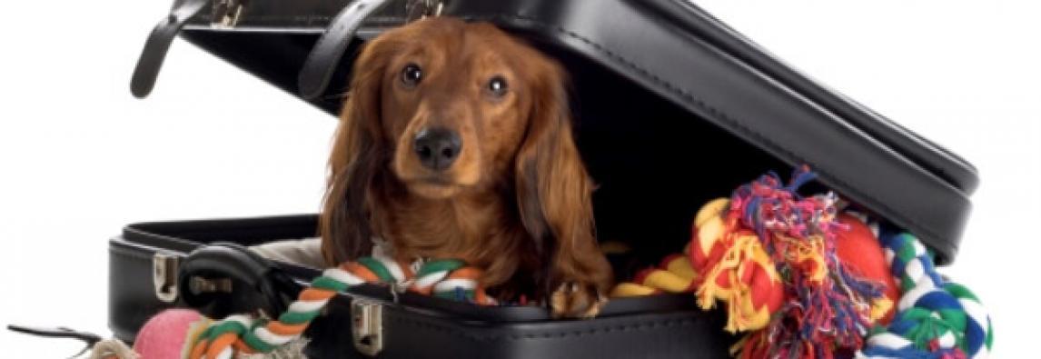 Seu cão passa mal durante as viagens ? Veja o que fazer!