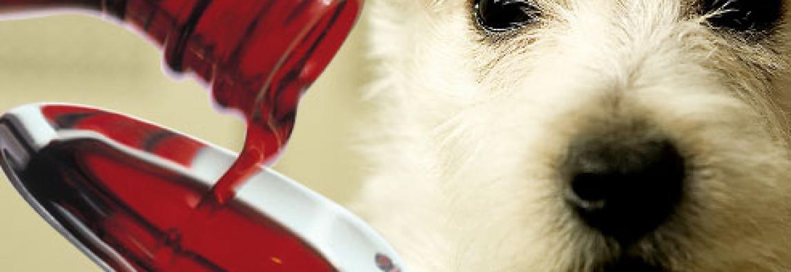 Veterinária alerta sobre perigo da automedicação em pets