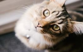 O que os gatos pensam sobre nós? Você vai se surpreender