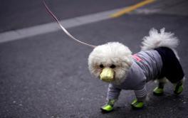 Cães e gatos podem pegar coronavírus?