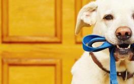 10 dicas para passear com o cachorro de forma segura e saudável