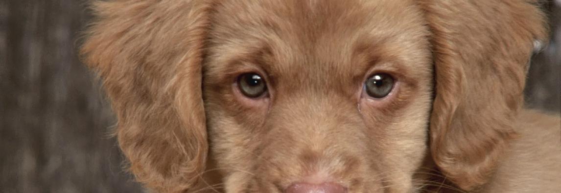 10 aplicativos incríveis para donos de cachorros