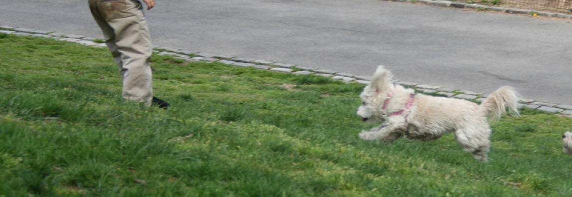Treinando o cão para obedecer sem guia
